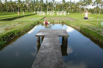 Not For Sale1.jpg
