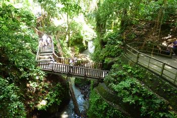 monkeyforest1.jpg