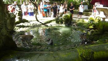 monkeyforest6.jpg