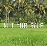 not-for-sale2.jpg
