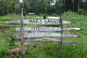 hars-garden.jpg