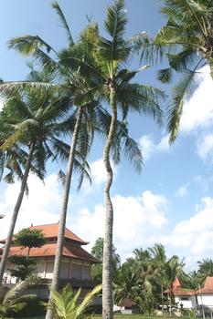 kelapa.jpg
