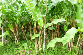 sekarbumi農菜園.jpg